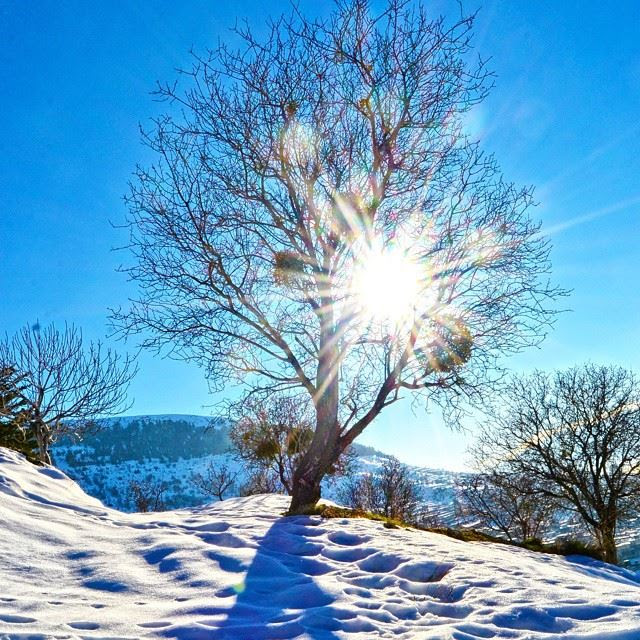 Good Morning All The Shining Tree Lala West Bekaa Lebanonhdr