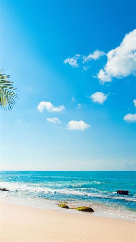 tropical sunshine iphone  wallpaper iphone