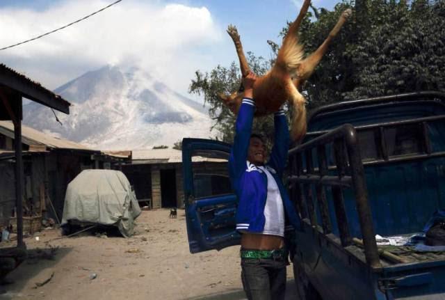 2014: Οι καλύτερες φωτογραφίες με ζώα