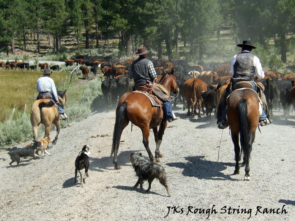 Workin' Dogs 'n Horses