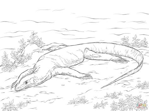 realistic monitor lizard coloring page  printable