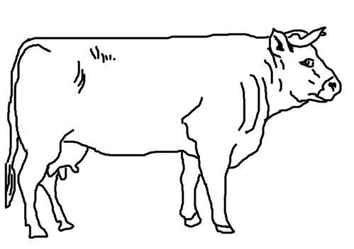 Coloriage Vache Flamande Le Blog De Ludovica