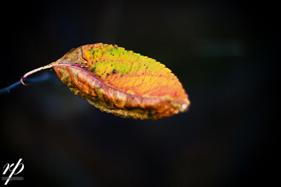 ~ 287/365 Fall Hanging in ~