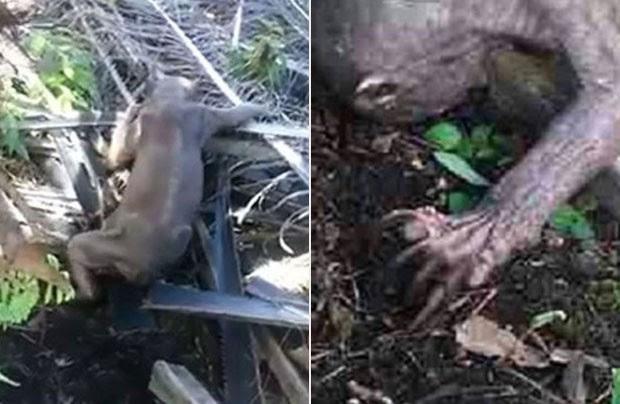 Trabalhadores indonésios se depararam com criatura bizarra em plantação (Foto: Reprodução/YouTube/The Borneo Post SEEDS)