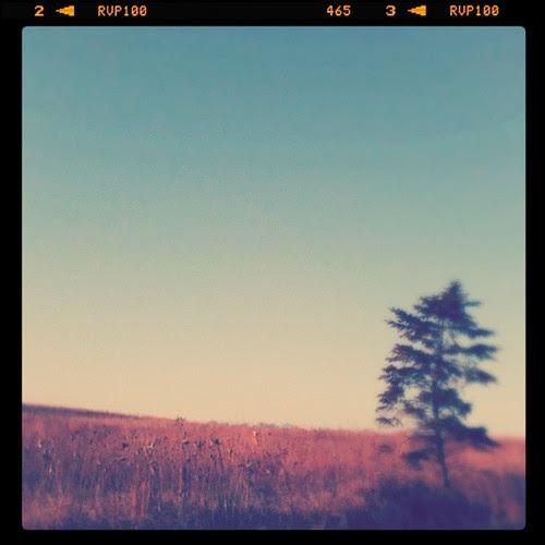 pine1111