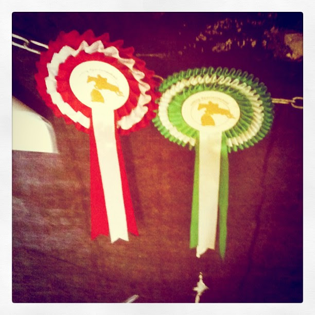 the ribbons are the wrong color -first and third in the jumping