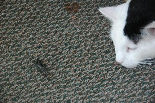 Ripley with Cicada