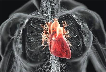 Mari Mengenal Jantung