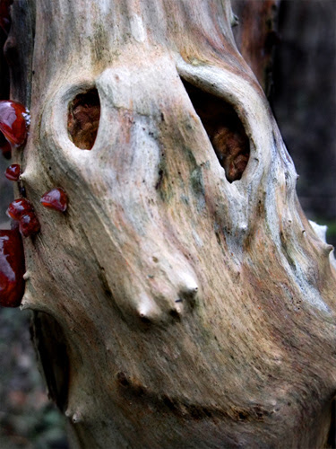 acne on a ghost tree