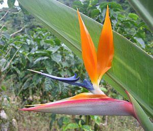 Near Orosí, Costa Rica