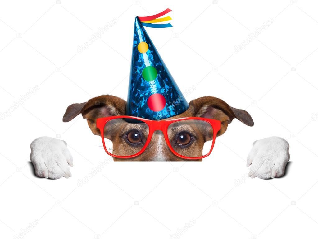 Resultado de imagem para aniversário de cão imagens