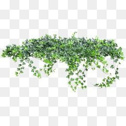 Greenery Png, Vector, PSD, and Clipart With Transparent