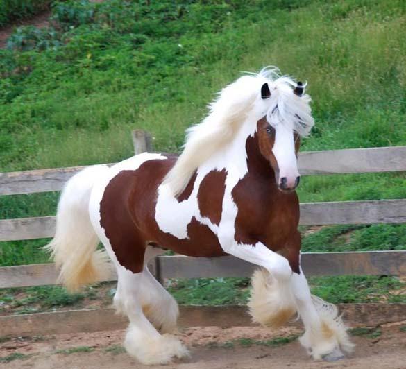 Τα πιο... Fabulous ζώα στο ζωικό βασίλειο (1)