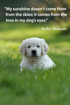 Dog Loyalty Quotes. QuotesGram