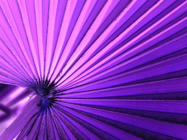 purple, flower, lines