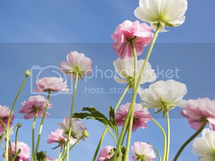 flower and sky