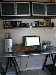 New desk with Jasper