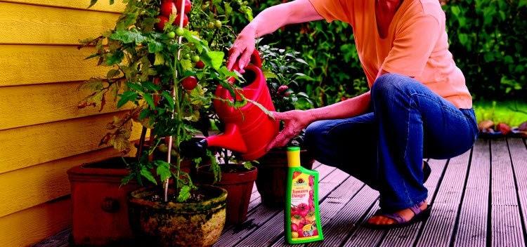 Чем подкормить помидоры для роста: какими удобрениями полить, чтобы томаты лучше росли, если они развиваются медленно, плохо или вовсе остановились