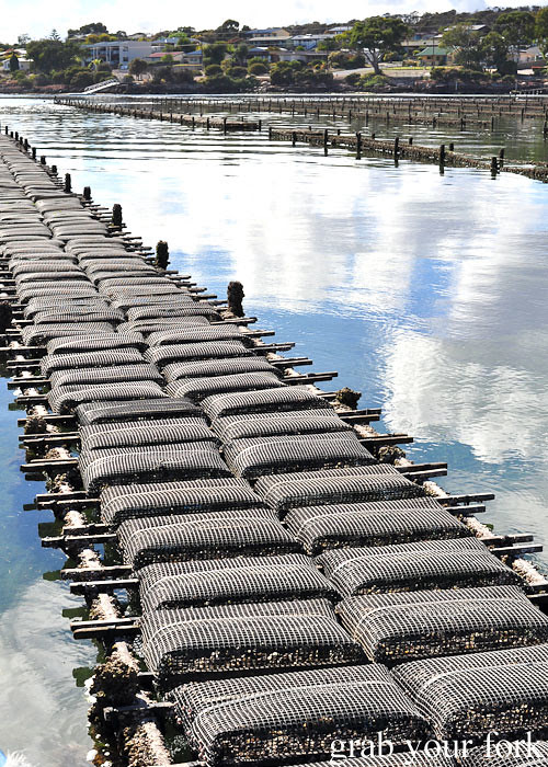 Rack and rail oyster farming at Coffin Bay, South Australia