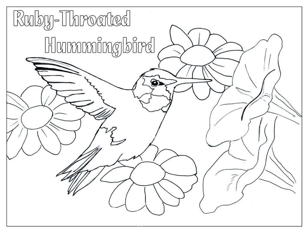 Humming Bird Coloring Page - Coloring Home