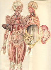 anatom 37 4b