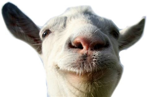 png goat animal farm funny lol freetoedit
