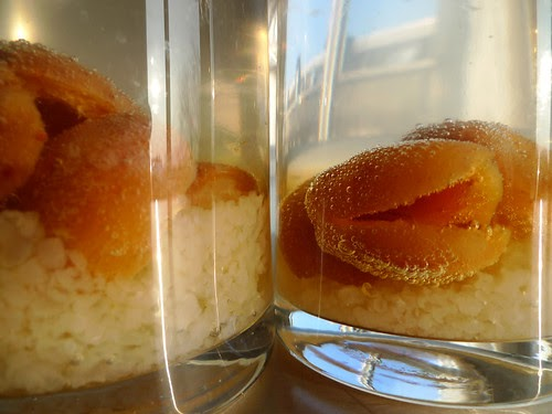 Experimenting With Water Kefir Tibicos Venusian Glow