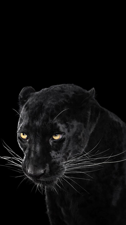 Black-Panther-Wallpaper-iPhone-Wallpaper - iPhone Wallpapers