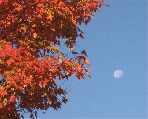 Autumn Daylight Moon2 10-17-08