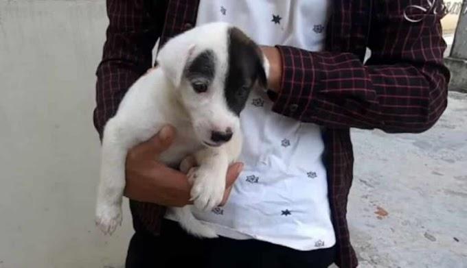 Abandonan un perrito en medio de la calle con un triste mensaje en su cuello