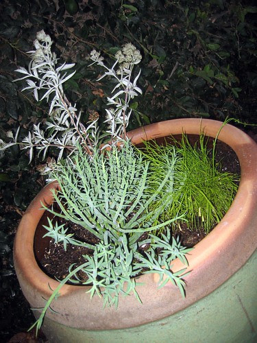 Potted plant design