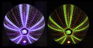 Sea Urchin laser fluorescence