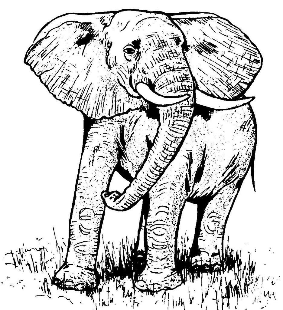 Dessin coloriage animal elephant