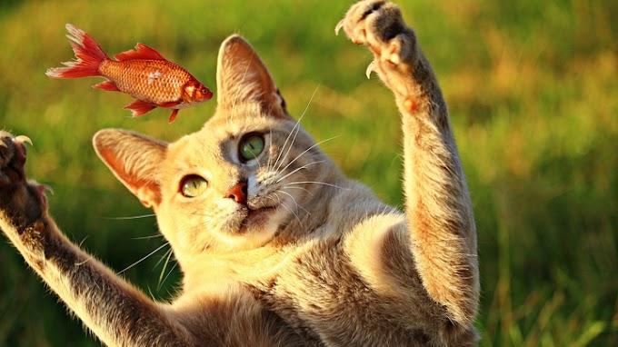 Los alimentos que tu gato nunca debe comer