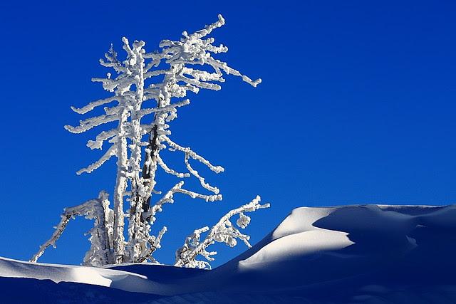 IMG_5436 Winter Magic, Crater Lake National Park