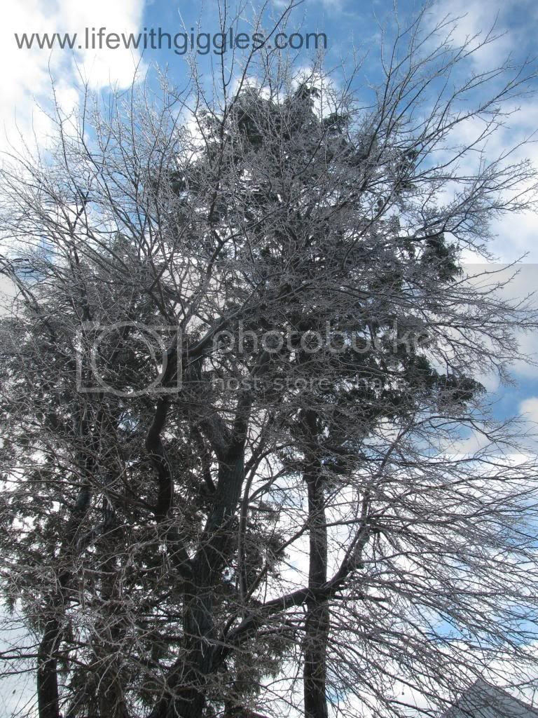 photo snow4_zpsd3666f43.jpg