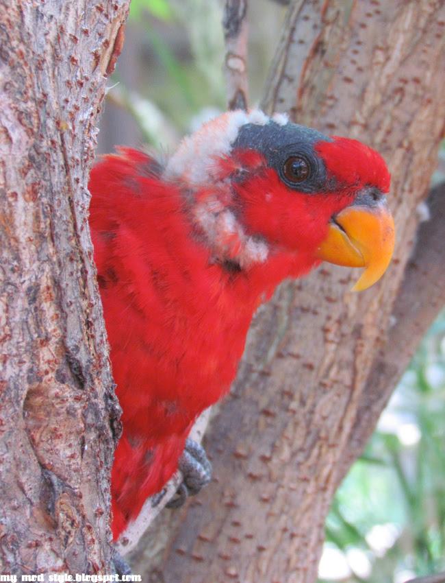 Denver Zoo Red Bird