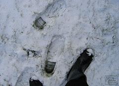 365 : 29.10 - first snow :: første snøen