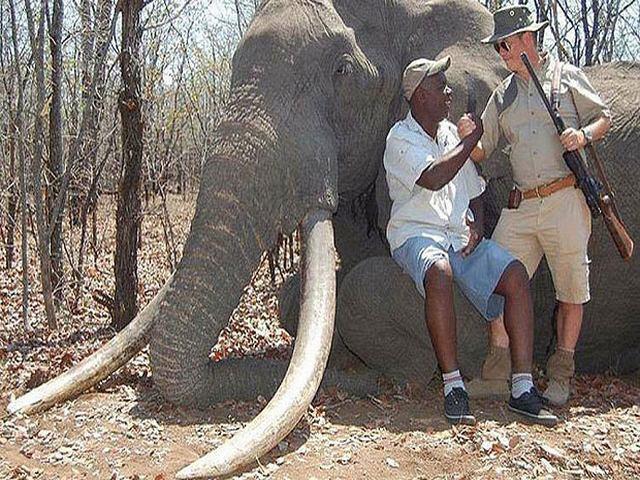 """Hình ảnh Thợ săn chi 1,3 tỷ để """"hạ"""" chú voi lớn nhất châu Phi số 3"""
