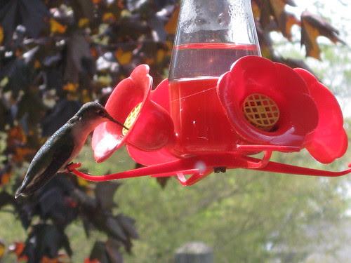 Hummingbird Perch by JKissnHug - Been busy birding