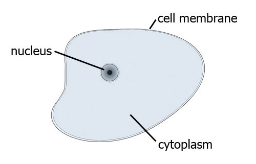 Plants cells - the properties of plant cells and how they ...