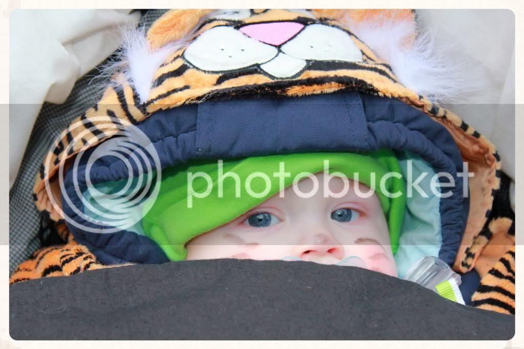 Karneval: Tigerkostüm für Babys