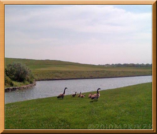 geese3fr