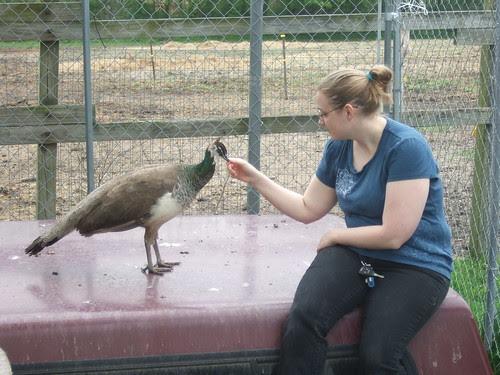 Shelby petting Osirus