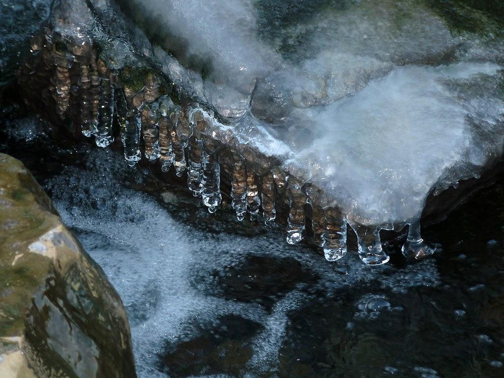 23904 - Frozen Dulais