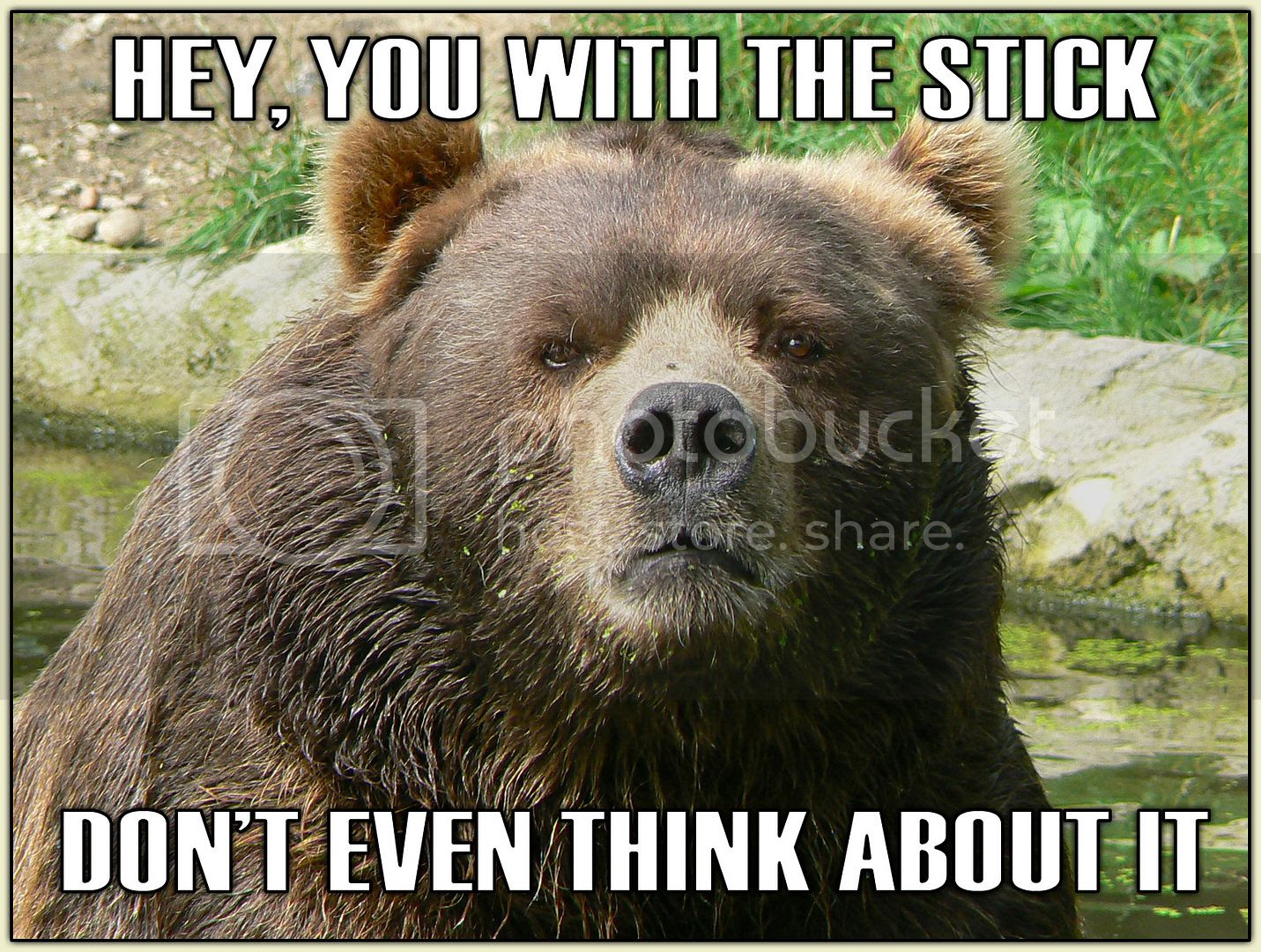 Pissed-Off Bear