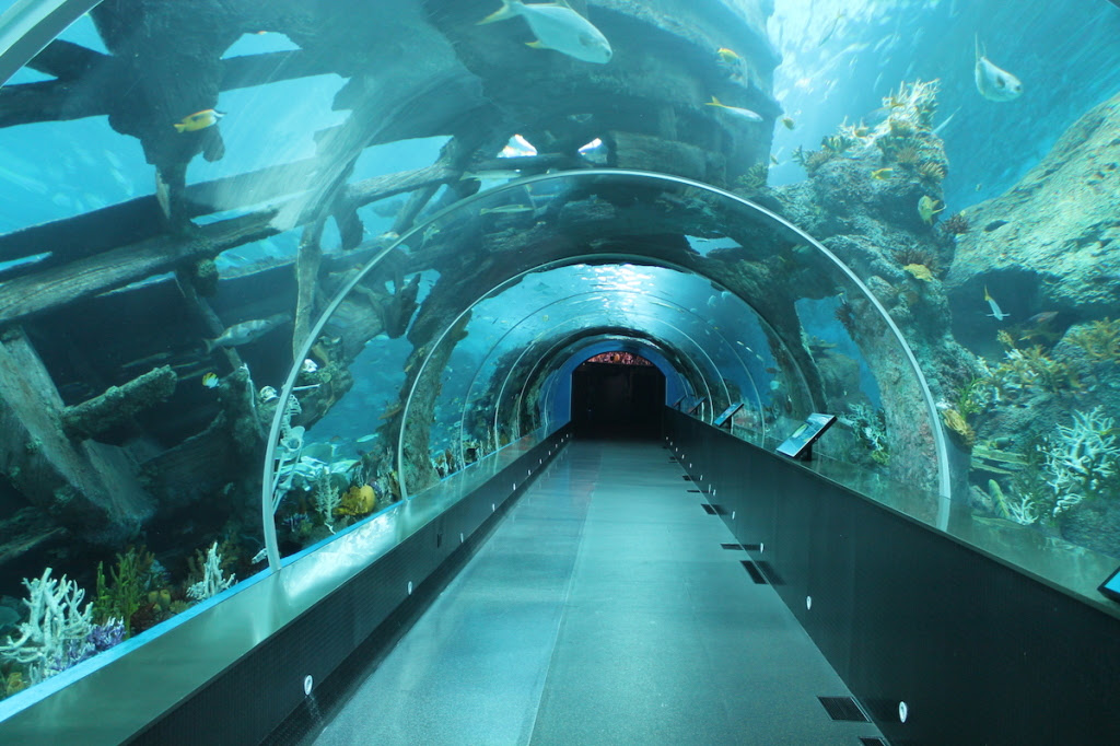 An Under Water Tunnel at the S.E.A. Aquarium