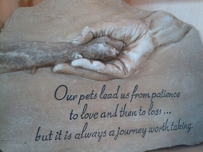 Dog Passing Quotes Custom Dog Death Quote Quote Number 48 Picture