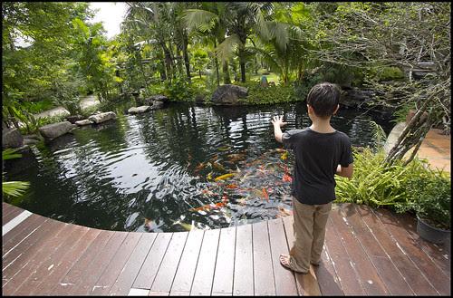 Feeding Fish at the cafe, Phuket Botanic Garden
