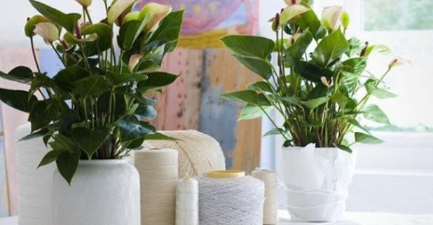 Take Help Of The Innovative Ideas To Decorate Your Home With Plants